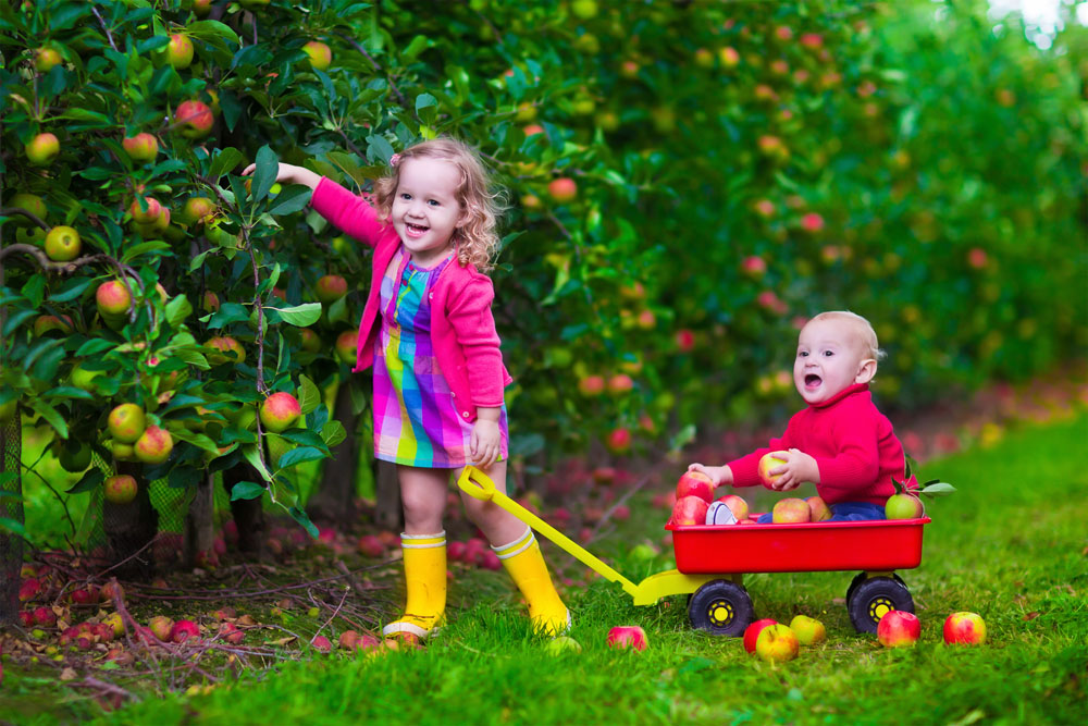 Kids Picking Apples - Fall Activity
